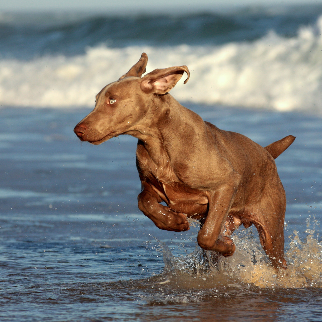 Active dog-at-simply-pets-online