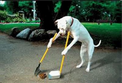 simply-pets-online-Dog-Poop-Testing