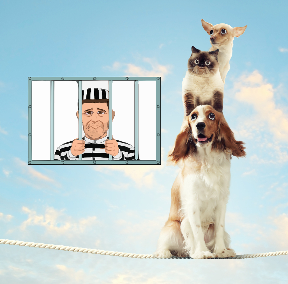 2 dogs and a cat on a thin rope looked over by a prisoner in his cell