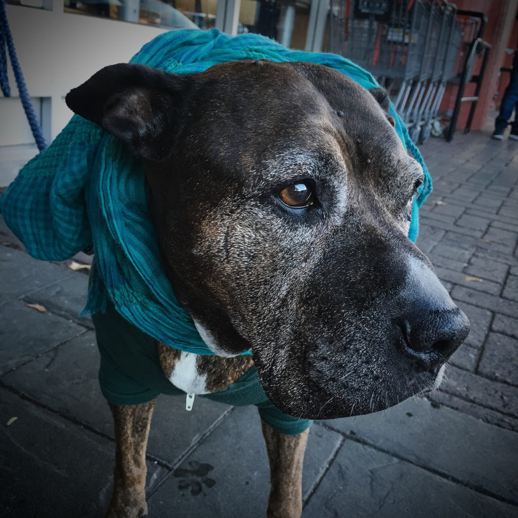 blog-2-old-dog-with-joint-pain-and-arthritis