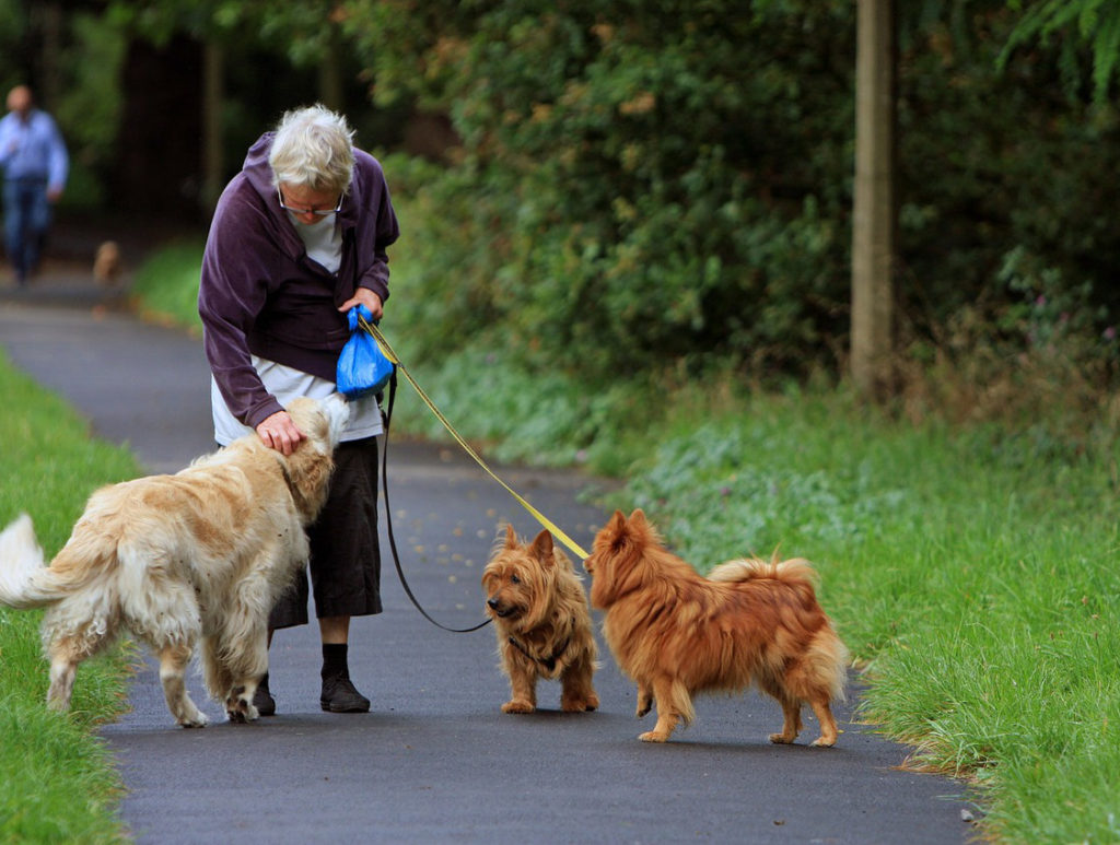 blog-5-exercise-old-dog-with-joint-pain-and-arthritis